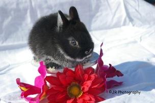 Dinky at 3 weeks old (now 18 motnhs)